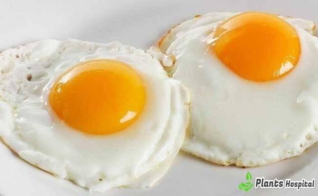 """huevos """"ancho ="""" 650 """"altura ="""" 400 """"srcset ="""" https://i2.wp.com/www.plantshospital.com/wp-content/uploads/2019/08/eggs.jpg?w=1140&ssl=1 650w, https://www.plantshospital.com/ wp-content / uploads / 2019/08 / eggs-300x185.jpg 300w """"tamaños ="""" (ancho máximo: 650px) 100vw, 650px """"></p data-recalc-dims="""