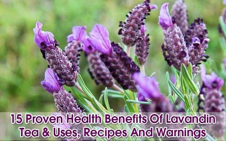 "Lavandin-tea-benefits ""width ="" 720 ""height ="" 450 ""srcset ="" https://i2.wp.com/www.plantshospital.com/wp-content/uploads/2019/09/Lavandin-tea-benefits.jpg?w=1140&ssl=1 720w, https: //www.plantshospital.com/wp-content/uploads/2019/09/Lavandin-tea-benefits-300x188.jpg 300w ""tamaños ="" (ancho máximo: 720px) 100vw, 720px ""></p> <div class="