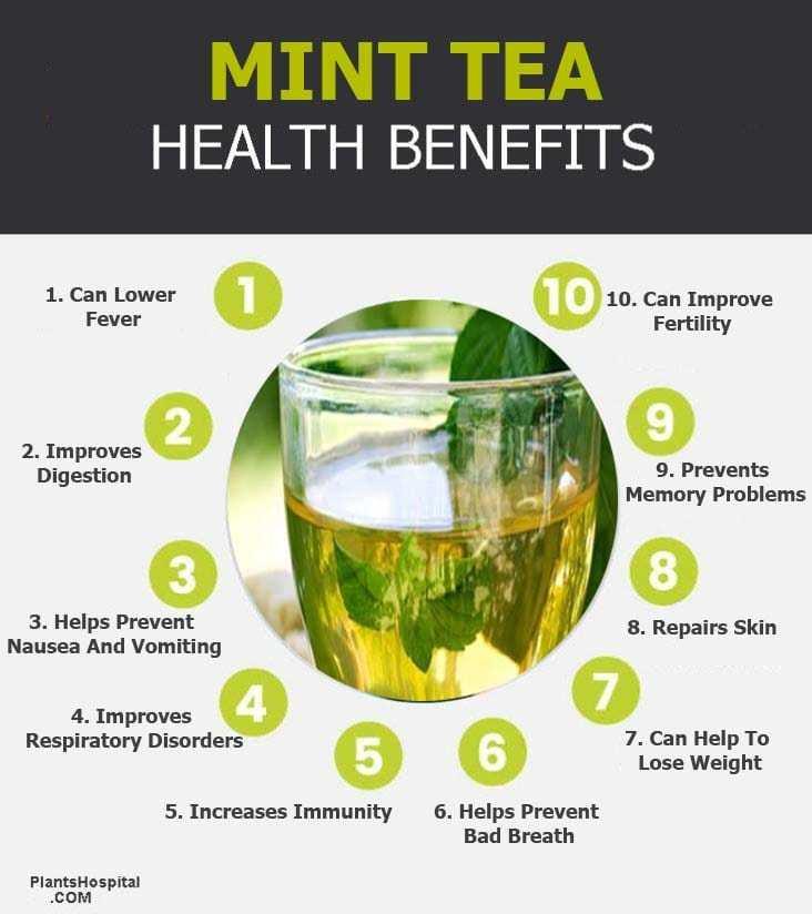 """mint-tea-graphic """"width ="""" 732 """"height ="""" 824 """"srcset ="""" https://i2.wp.com/www.plantshospital.com/wp-content/uploads/2019/09/mint-tea-graphic.jpg?w=1140&ssl=1 732w, https: //www.plantshospital.com/wp-content/uploads/2019/09/mint-tea-graphic-267x300.jpg 267w """"tamaños ="""" (ancho máximo: 732px) 100vw, 732px """"></p> <h3>6. Ayuda a prevenir el mal aliento</h3> <p><strong>Té de menta</strong> El sabor fuerte, con mentol y la calidad antibacteriana es una forma ideal de despejar el aliento. Los ingredientes antibacterianos matan los gérmenes que pueden causar mal aliento, mientras que el mentol en el té suprime el mal olor y deja el aliento fresco y limpio.</p> <h4>7. El té de menta puede ayudar a perder peso</h4> <p>El aroma del aceite de menta y sus ingredientes orgánicos en <strong>té de menta</strong> puede ayudar a controlar su apetito, reduciendo así el comer en exceso y evitando así la obesidad a largo plazo.</p> <p><strong>Selección del editor:</strong></p> <blockquote class="""