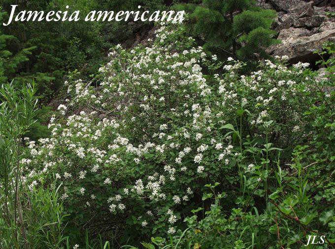 Non Flowering Bushes