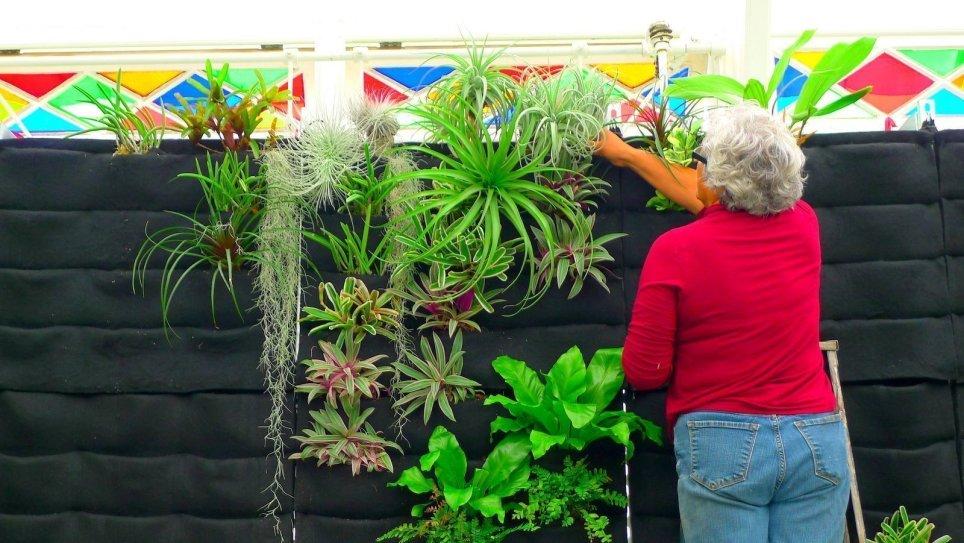 Guadalupe Cota. San Francisco Conservatory Of Flowers. Florafelt Vertical Garden Planters.