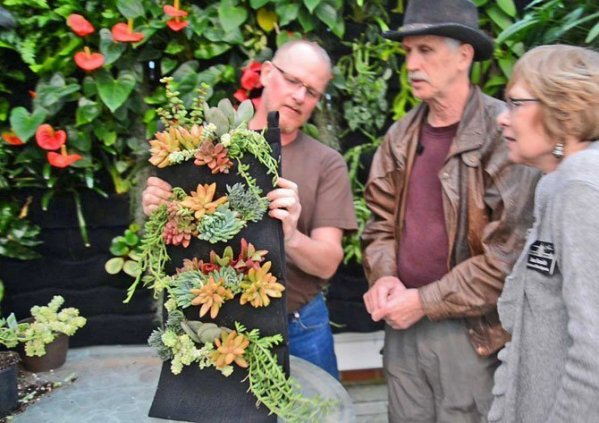 Chris Bribach demonstrates how to plant a Florafelt Vertical Garden Planter with Succulents at the San Francisco Conservatory of Flowers