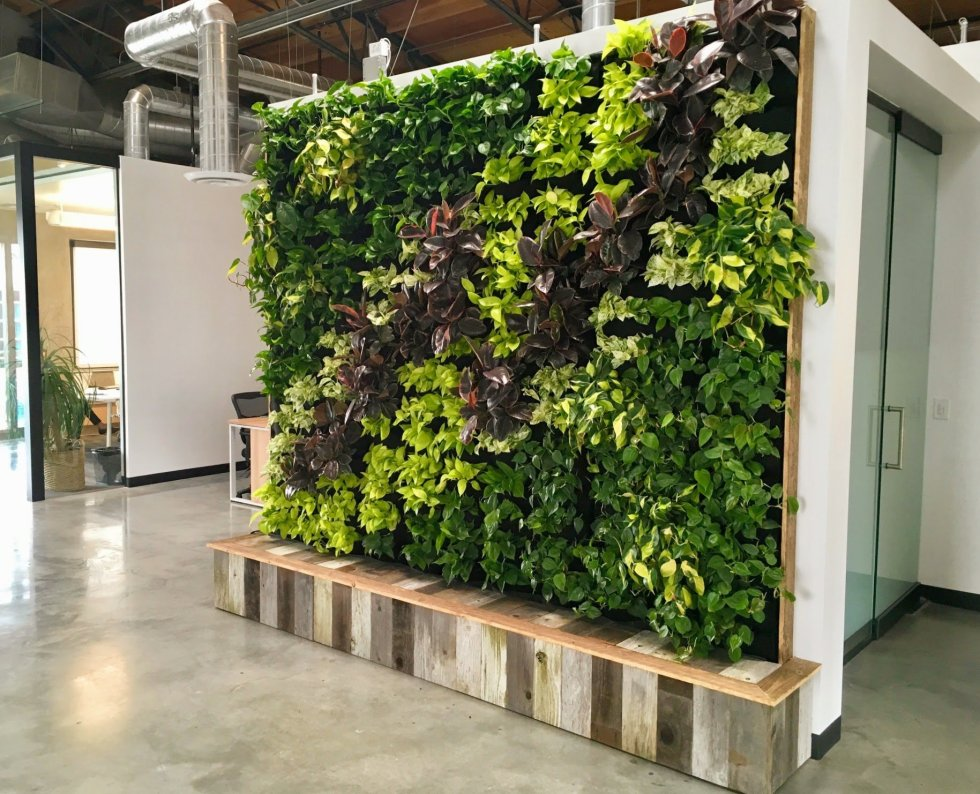 Plants on walls florafelt vertical garden living wall for Living plant walls