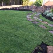 Native Dichondra lawn