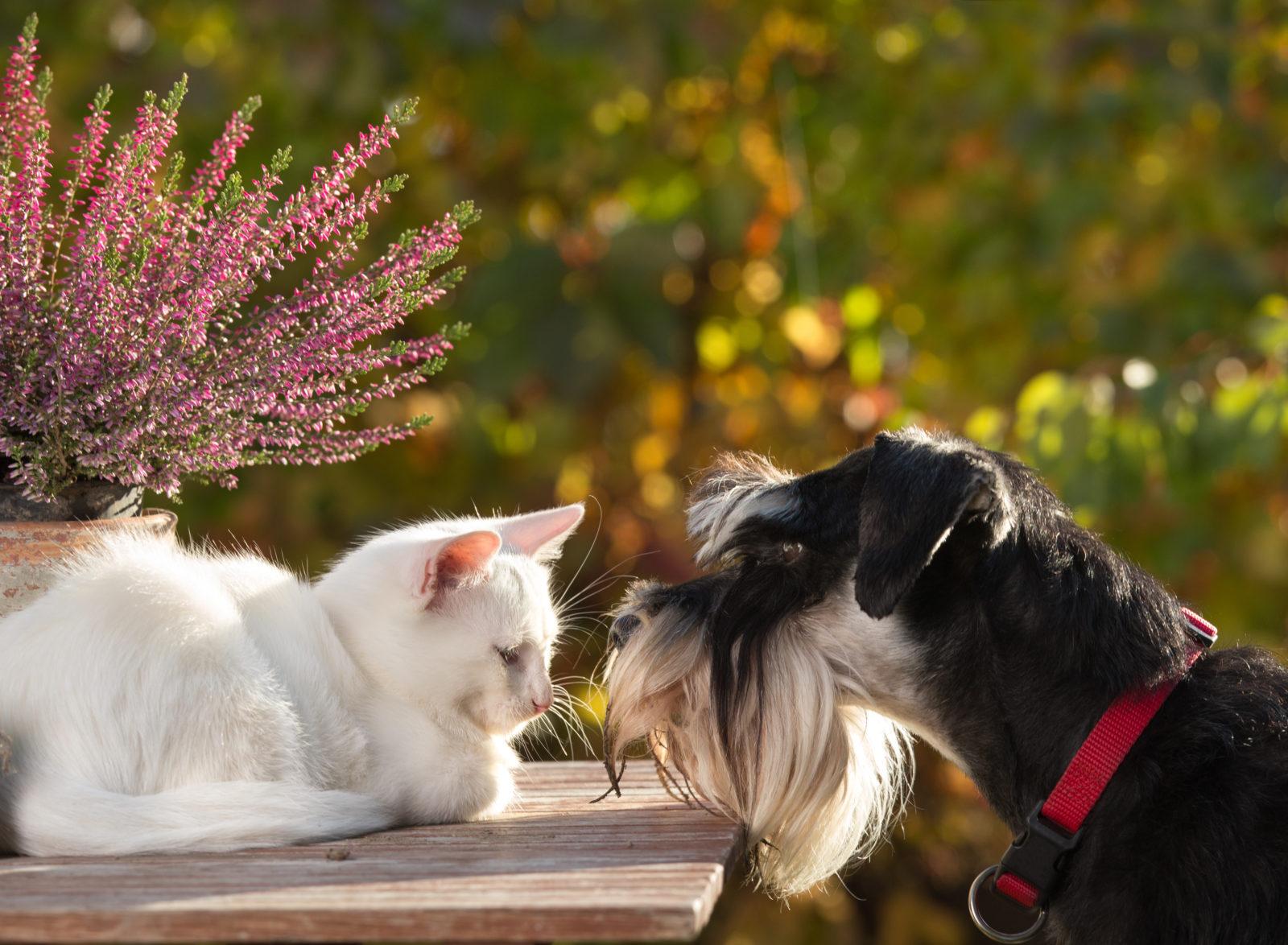 10 Haustierfreundliche Pflanzen Für Garten Wohnung Plantura