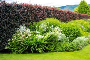 Pflanzen als Sichtschutz für Garten & Balkon   Plantura