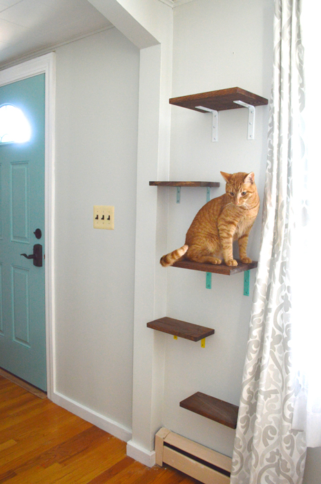 Cat Shelves Yes You Read That Right Plaster Amp Disaster