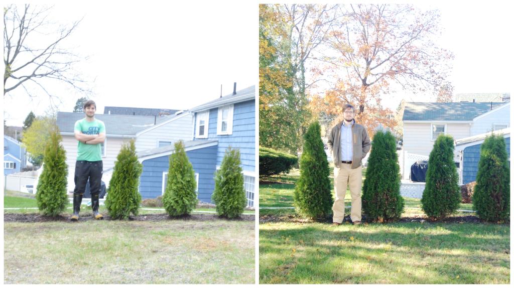 Hedge -- Plaster & Disaster
