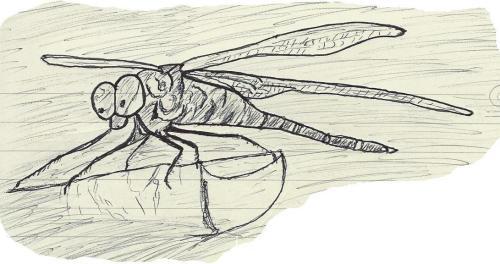finger dragonfly jpeg