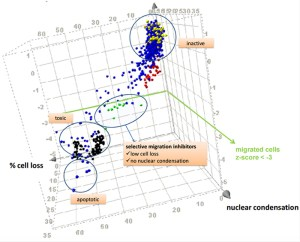 High content analysis of cell migration