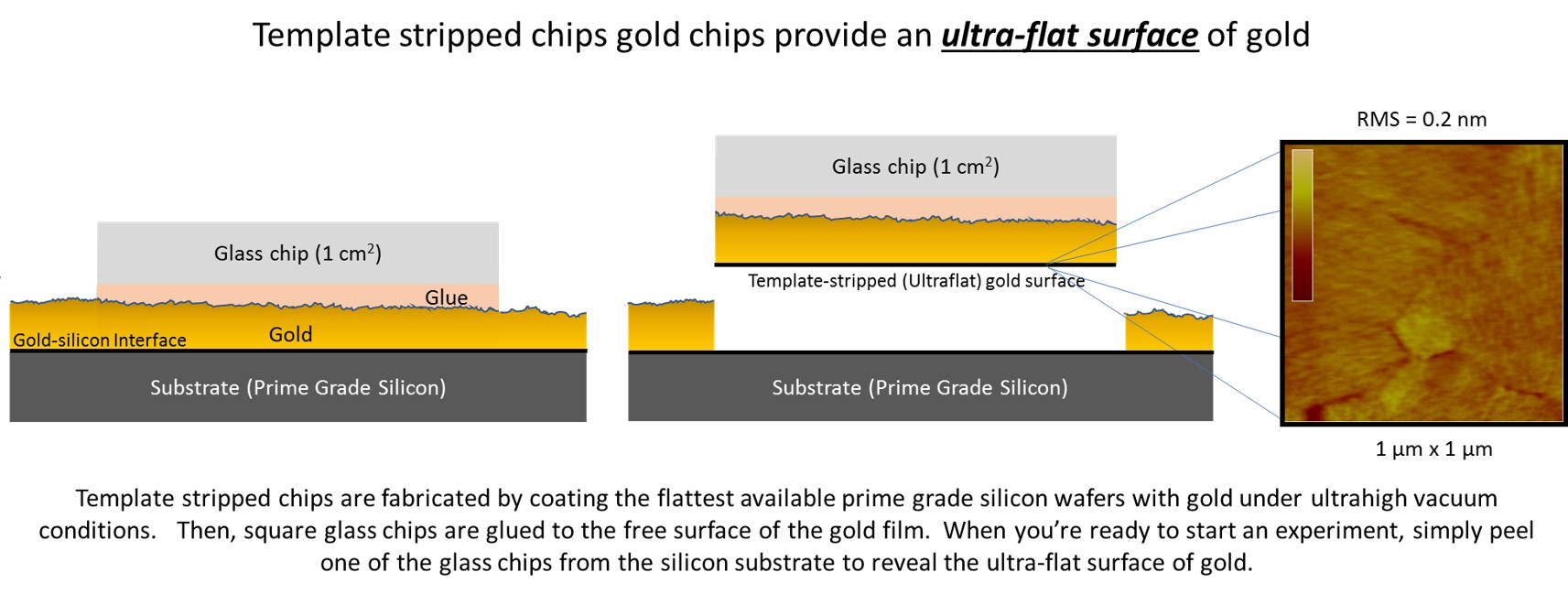 ultra flat gold films platypus template stripped gold chips