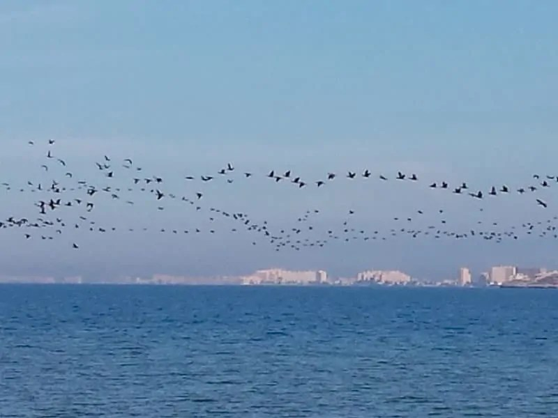 Migration of birds over Playa Honda