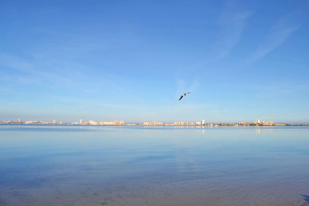 Pájaro volando sobre la playa del Mar Menor en Playa Honda