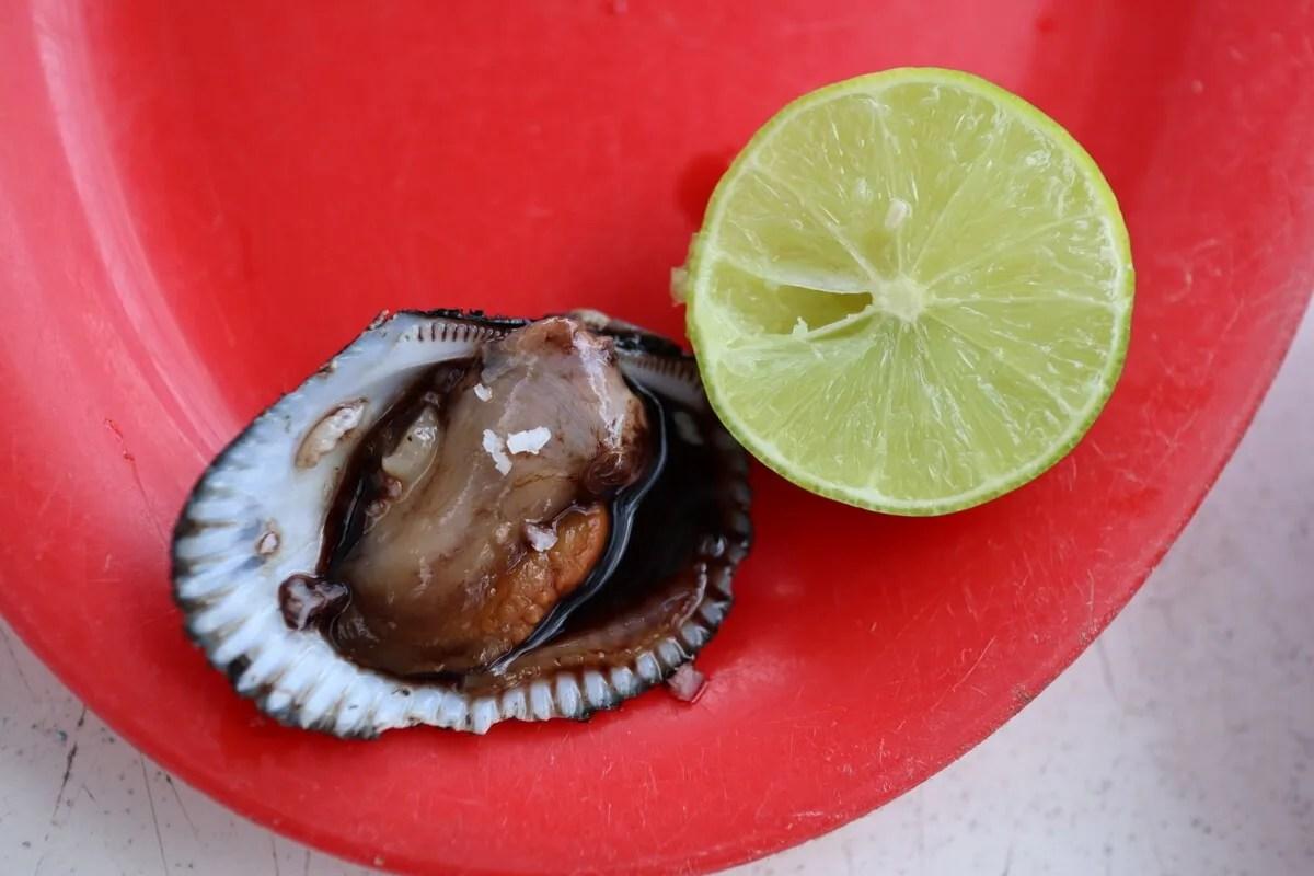 Pata de Mula Clam, Nayarit. Mexican Seafood