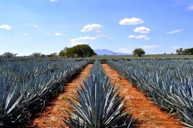 Touring Tequila, Jalisco, and the Valles Region Around the Volcano