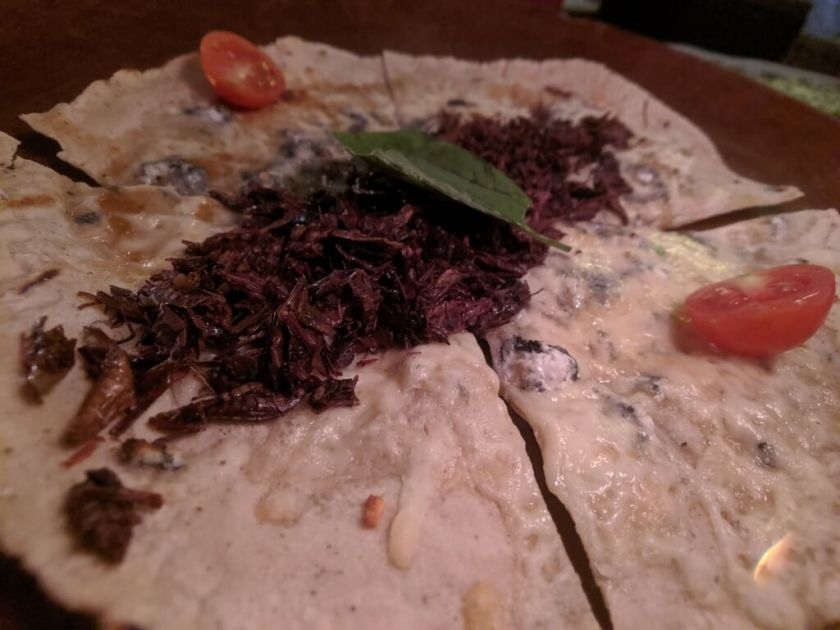Tlayuda with crickets and cheese.