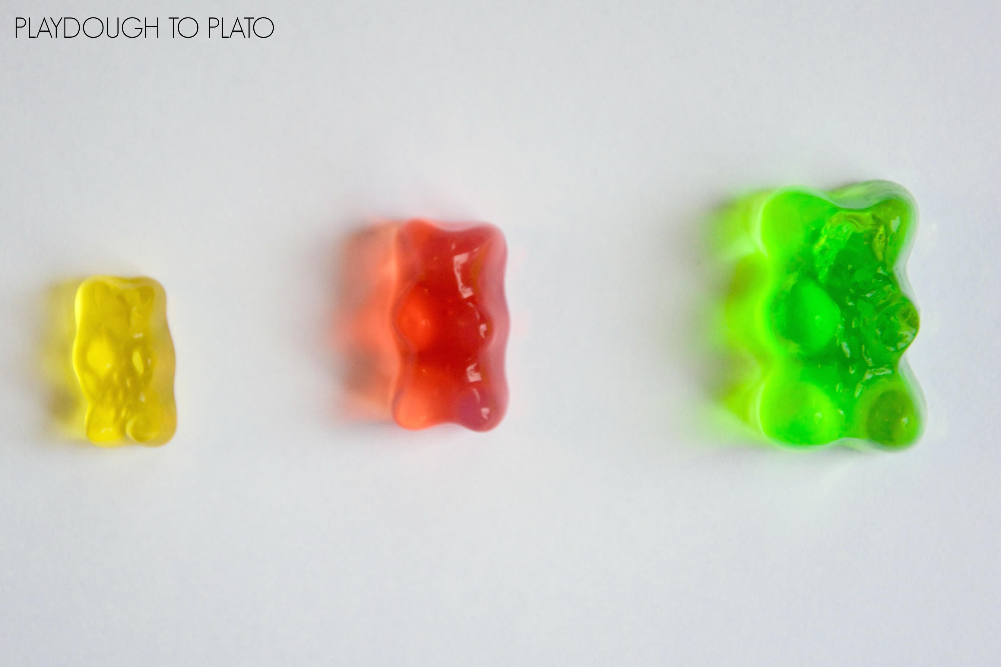 Growing Gummy Bear Science