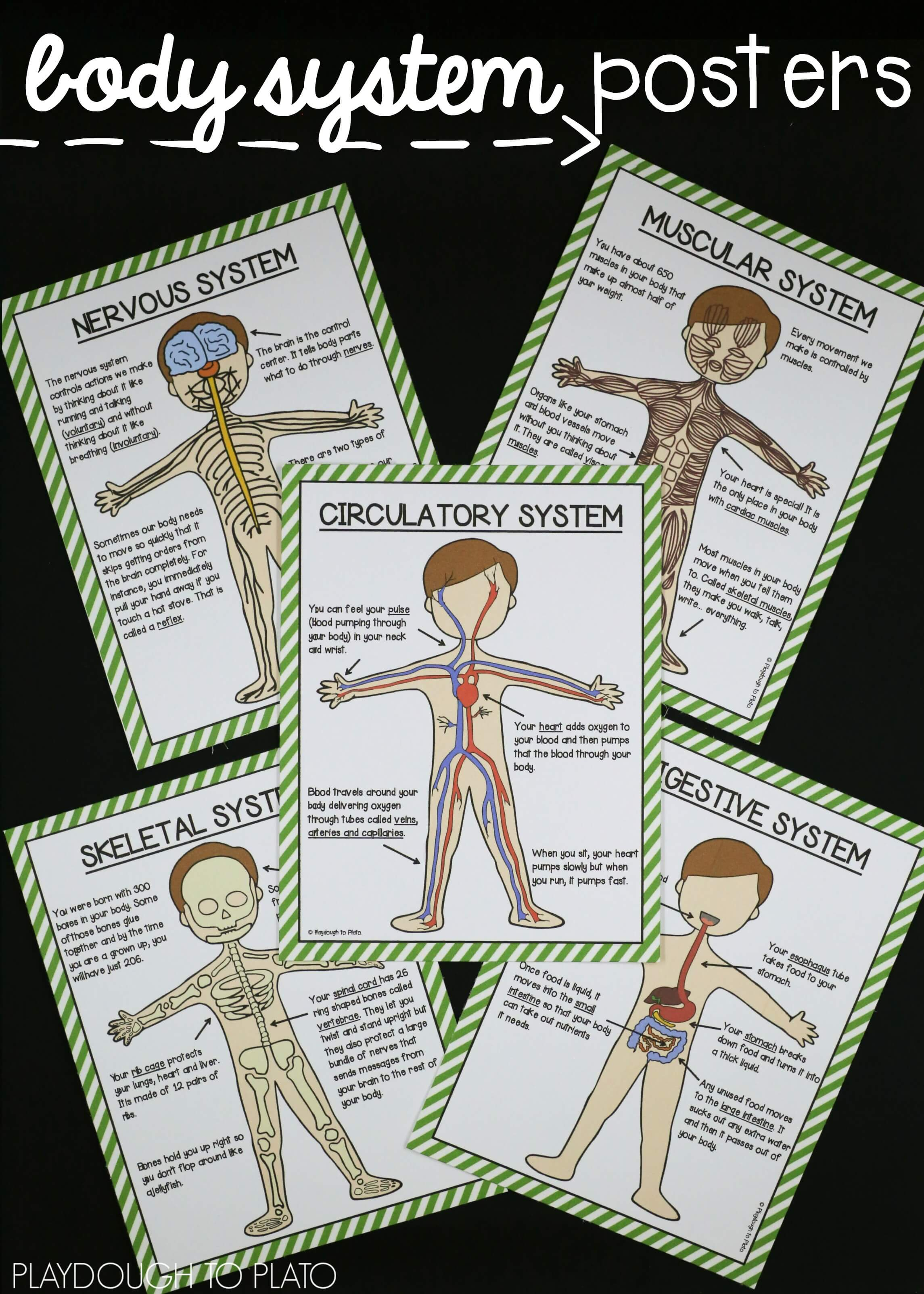 Human Body Systems Pack