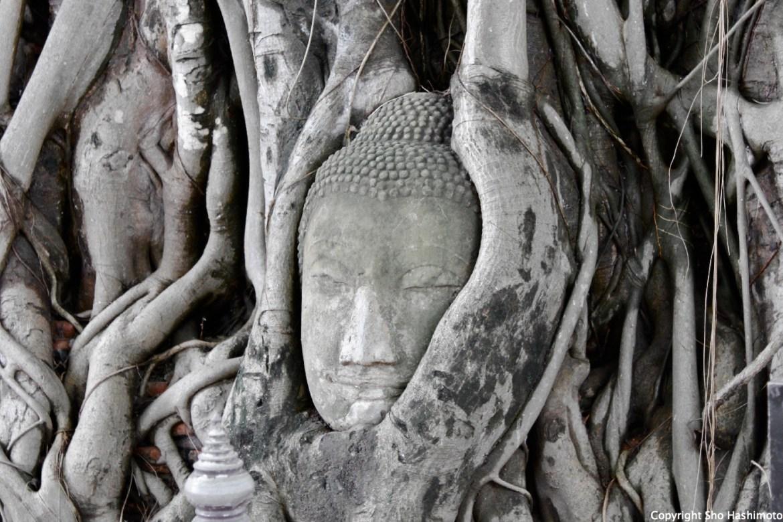 埋まる頭/カンボジア