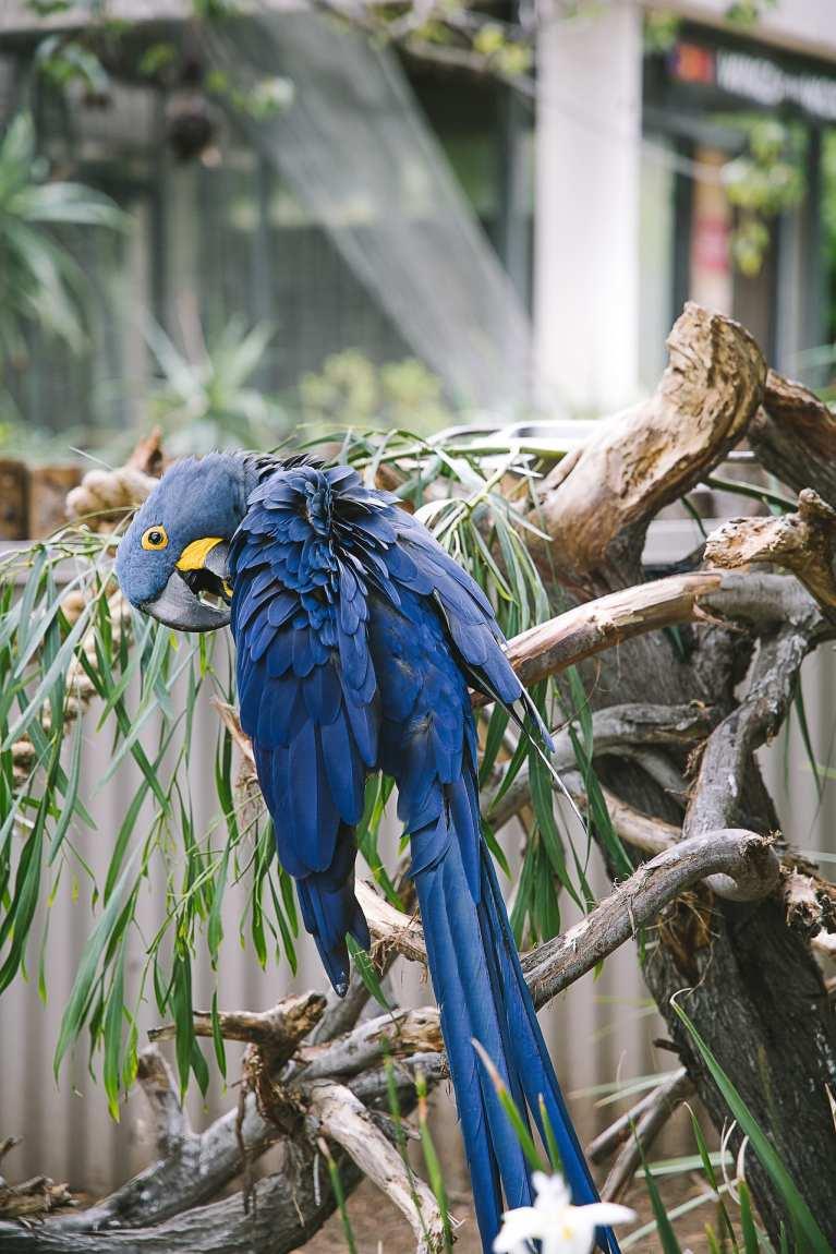 San Diego Zoo and Safari #travel #photography #zoo #safari