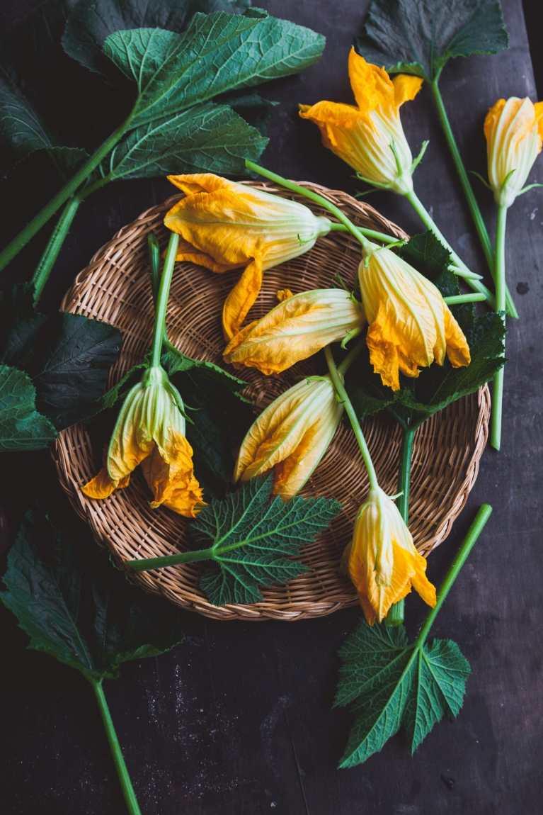 Zucchini Blossoms Photography
