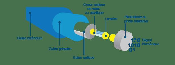 Composition de la fibre optique