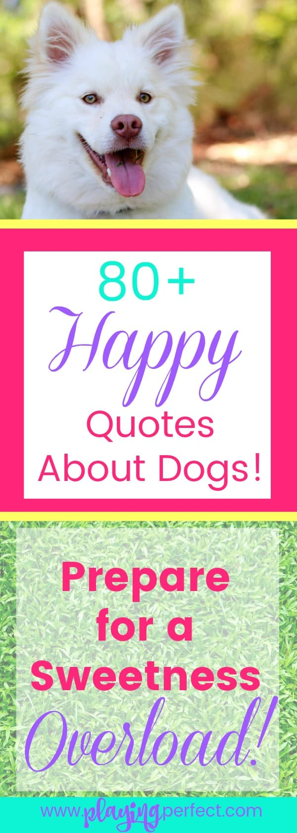 Quotes To Make You Happy 84 Quotes About Dogs That Will Make You Happy You're A Dog Mom