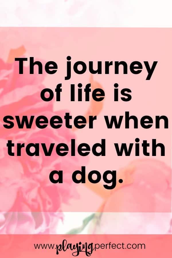 Generous Sad Quotes Losing Animal Pictures Inspiration - Valentine ...