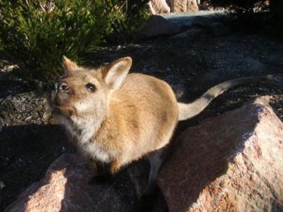 © Romain Dondelinger Tasmanie Freycinet 6