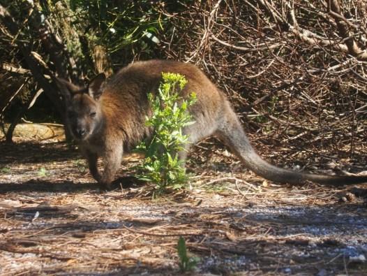 © Romain Dondelinger Tasmanie Freycinet 8