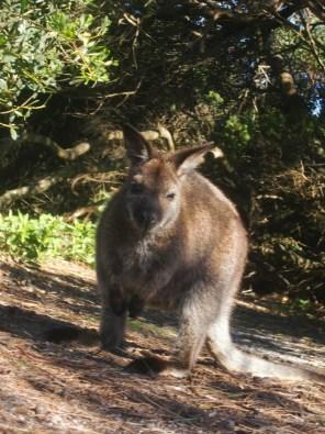 © Romain Dondelinger Tasmanie Freycinet 9