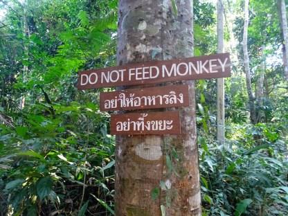 ©playingtheworld-khaosok-thailande-voyage-3
