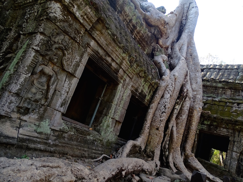 ©playingtheworld-temples-angkor-taprohm-cambodge-voyage-11