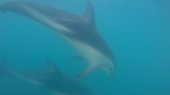 Dolphins Encounter