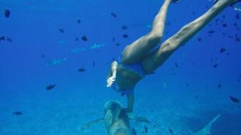 Sharkride