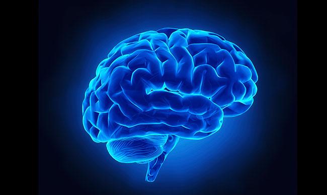 Blue Brain PPT   Play PPT
