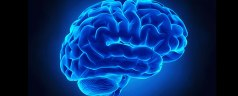 Blue Brain PPT