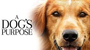 Review : A Dog Purpose (DVD)