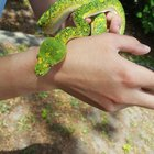 6waG vAi2Be0s1Wq7ahfFw4daZrjDmf3OHf5jB727CM Tree snek did a shed and wanted to show her beautiful colors