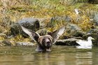 jYCVo71LVwHMmSid4ejwYLFiJlyV3i mz3 Lx7zQkk PsBattle: This bear perfectly positioned in front of a birds wings