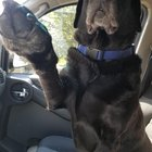 KkAgixfTXY79mFKmvud0l80hABDocwfYZAH51RqbANU Shes 13yo and still makes me hold her paw while driving.