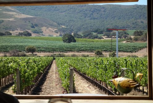 Fiddlestix Vineyard, Sta. Rita Hills AVA
