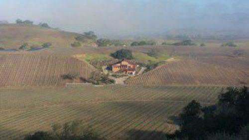 Grassini Vineyards