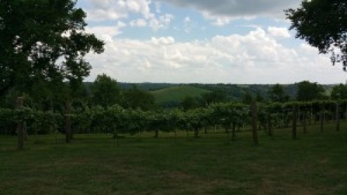 First Vineyard