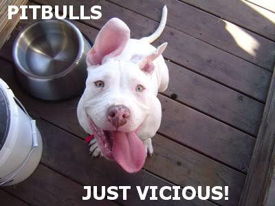 Cute Funny Pit Bulls19 Good Dog Food For Pitbulls