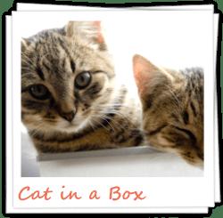 zur Katzenbilder-Galerie Cat in a box