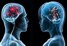Cérebro de homem e de mulher