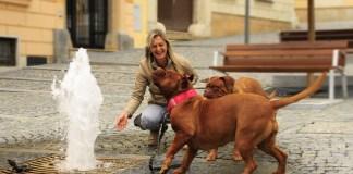 Mulher passeando com cachorros