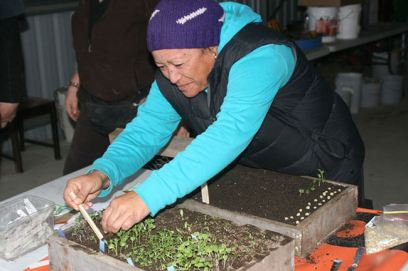Pricking out workshop on garden day