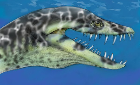 Elasmosaurus head
